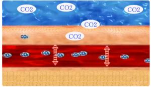 炭酸健康法