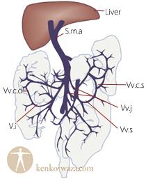 大腸と肝臓