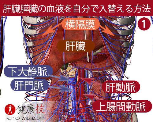 伝統技!自分で肝臓や膵臓内の血液を入れ替えられる方法が凄い1健康技