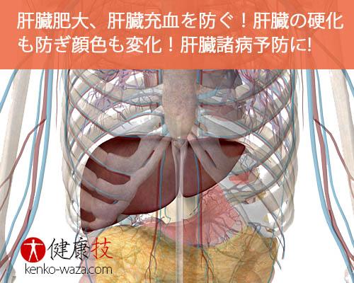 肝臓肥大、肝臓充血を防ぐ!健康技